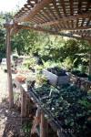 Native Plant Starts: Paige Green Photo